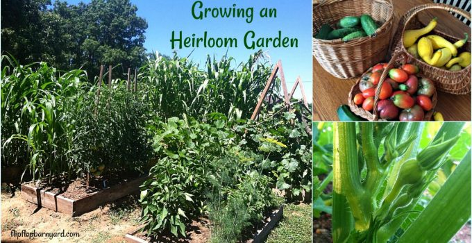 3 Fantastic Reasons to Grow an Heirloom Garden