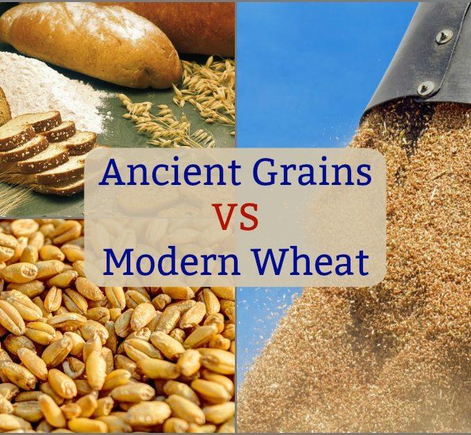 Ancient Grains vs Modern Wheat