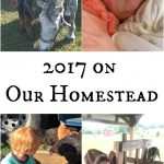 2017 on Our Homestead | The Flip Flop Barnyard