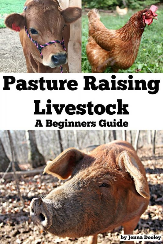 "A photo collage of a book cover. a cow, a chicken, and a pig with the words ""Pasture Raising Livestock- A Beginners Guide"" by Jenna Dooley of The Flip Flop Barnyard"