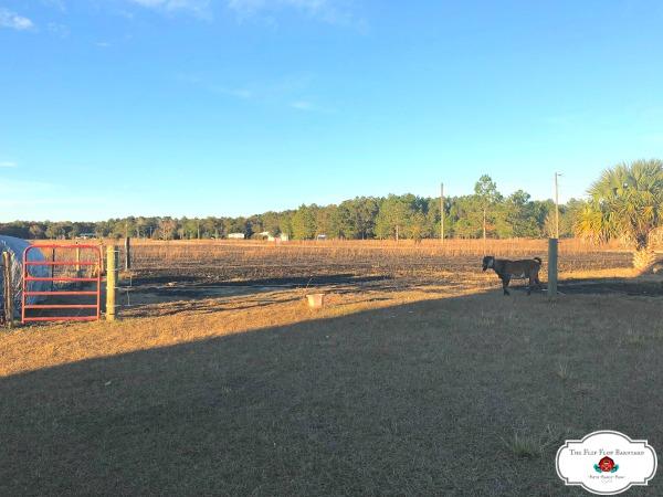 Meeps pasture is 2/3 burned.