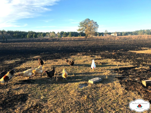 Most of our back pasture is gone.