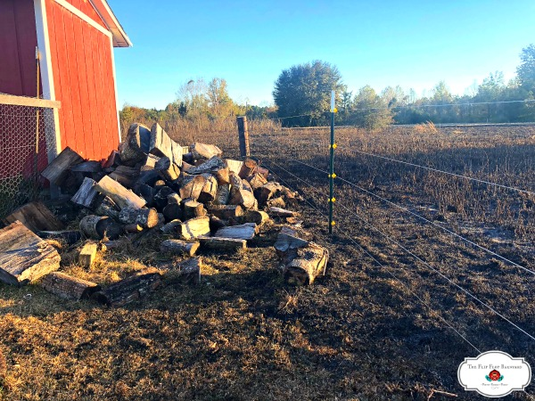 Wood pile and chicken coop with charred grass right up against it.