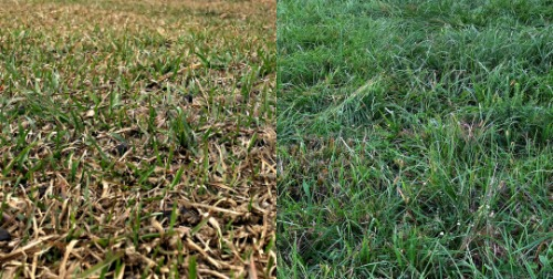 The difference between managed and unmanaged pasture for livestock.