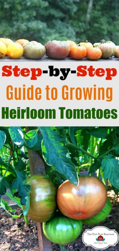 """a photo collage of heirloom tomatoes with the words """"step by step guide to growing heirloom tomatoes"""""""
