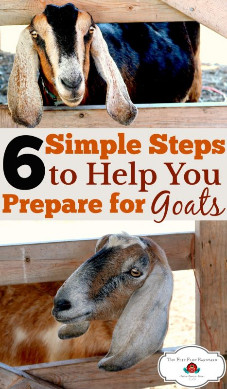 You can take these 6 simple steps to prepare for raising goats on your homestead. What do you need to get started with goats? Here is everything you need to know about raising goats.