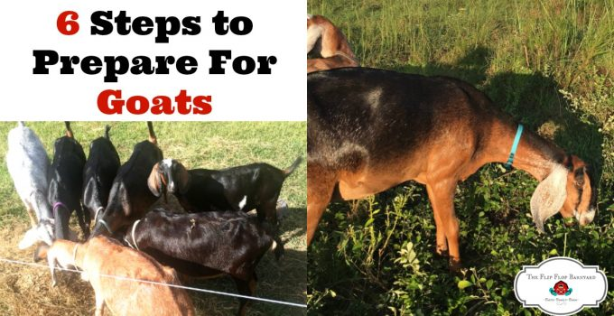 6 Steps to Prepare for Goats