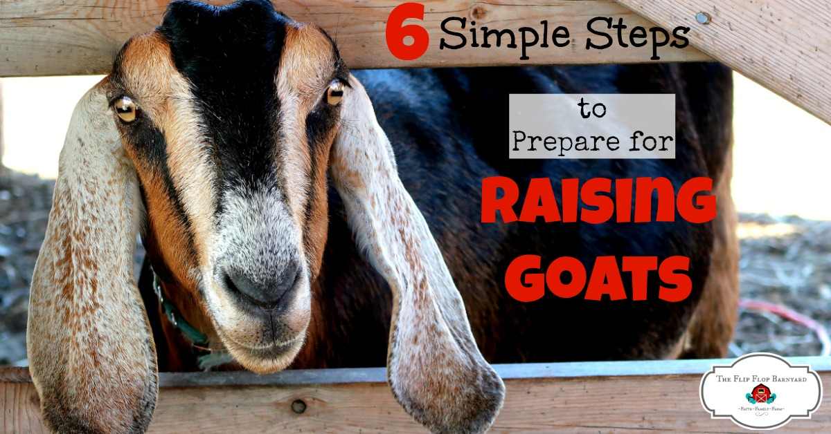 6 Simple Steps to Prepare for Raising Goats