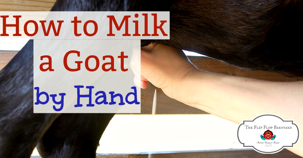 How to Milk a Goat by Hand