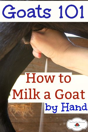"a hand milking a goat's udder with the words ""how to milk a goat by hand"""