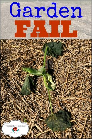 Gardening is so amazing. Sometimes, things don't go exactly how we want them to. Here's our big garden fail.
