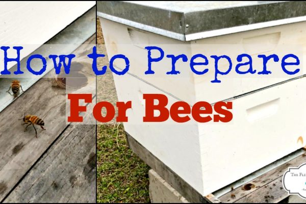 Preparing for Bees on the Homestead