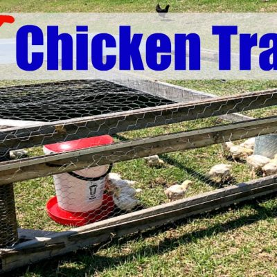 photo of a chicken tractor with the words DIY chicken tractor