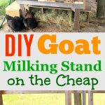 """a photo collage of a wooden homemade goat milking stand with the words """"DIY goat milking stand on the cheap""""."""