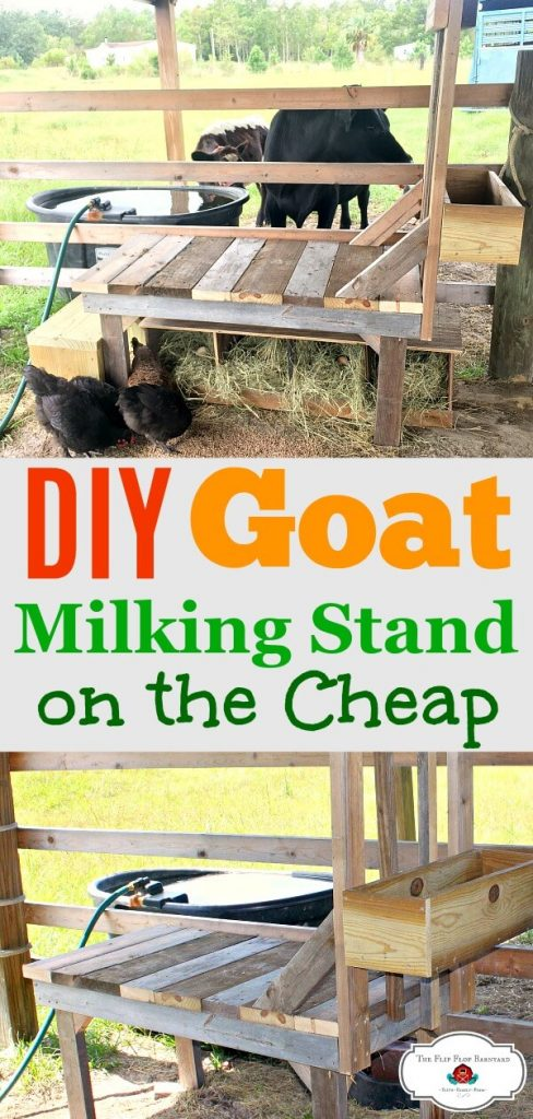 "A picture collage of a goat milk stand and the words ""DIY Goat Milking Stand on the Cheap""."