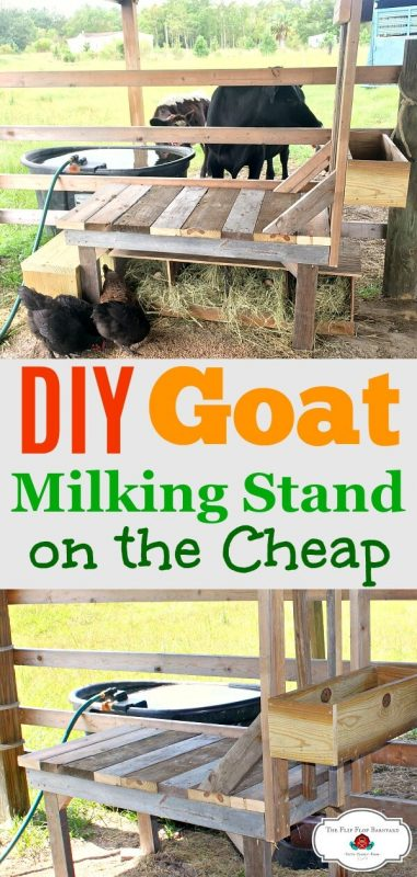"a photo collage of a wooden homemade goat milking stand with the words ""DIY goat milking stand on the cheap""."