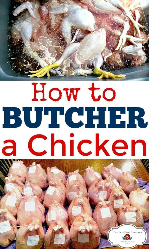 """Photo collage of processed chickens in and ice bath and packaged chickens on a table with the words """"how to butcher a chicken""""."""