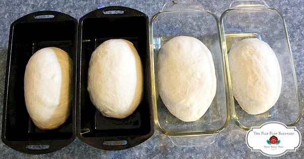 four loaves of sourdough in pans to rise before baking