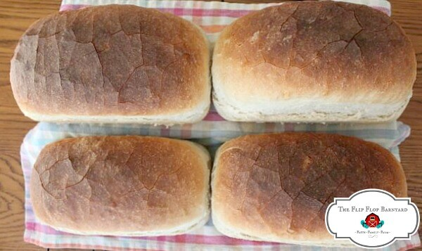4 loves of sourdough bread fresh out of the oven