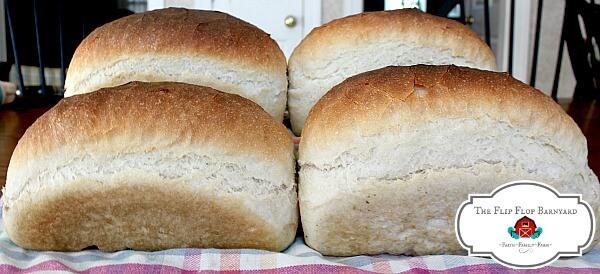 beautiful loaves of sourdough bread