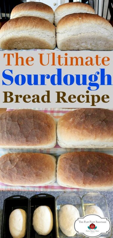 "photo collage og loaves of sourdough bread and the words ""the ultimate sourdough bread recipe"""