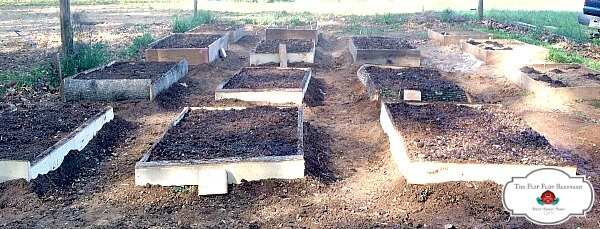 square foot gardening beds filled with soil