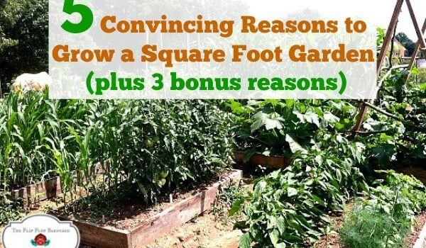 "photo of a garden with raised beds and the words ""5 Convincing Reasons to Grow a Square Foot Garden(plus 3 bonus reasons)"""