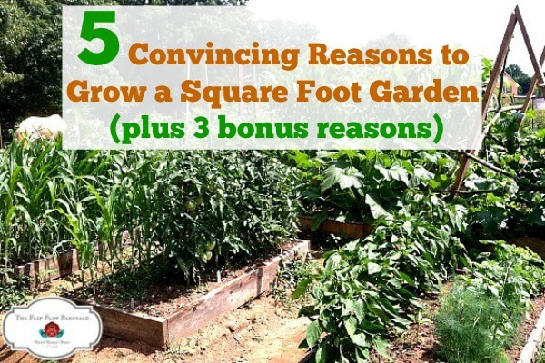"""photo of a garden with raised beds and the words """"5 Convincing Reasons to Grow a Square Foot Garden(plus 3 bonus reasons)"""""""