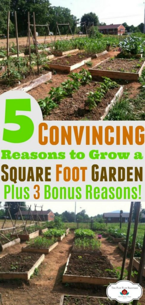 """a photo collage of a square foot garden from different angles with the phrase """"5 convincing reasons to grow a square foot garden plus 3 bonus reasons"""""""