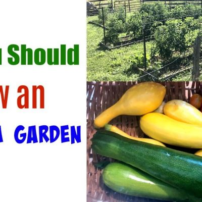 a photo of a garden and a basket full of vegetables
