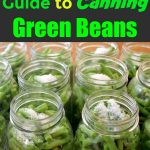 Green beans in mason jars