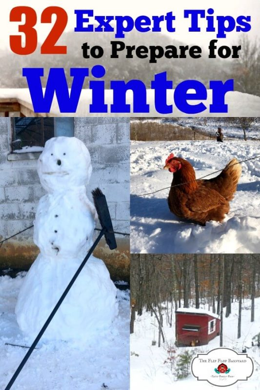 A collage of winter pictures