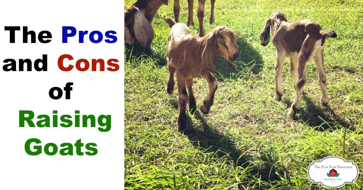 The Pros and Cons of Raising Goats