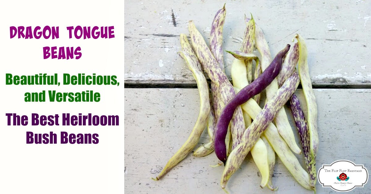 How to Grow Dragon Tongue Beans – Beautiful and Delicious
